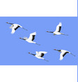 flying japanese stork flock vector image