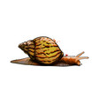 garden snail from a splash watercolor colored vector image vector image
