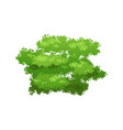 green bush icon vector image