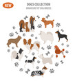 miniature toy dog breeds set icon isolated on vector image