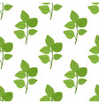 oregano leaves seamless pattern condiment vector image