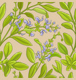 sage pattern vector image vector image