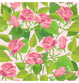 Floral seamless pattern with blooming pink roses vector image