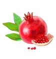 picture of Pomegranate vector image