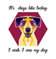 colorful dog with quote vector image vector image