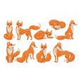 flat set of bright red fox in different vector image