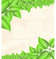 Floral Leaves frame Background vector image vector image