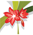 flower red lily vector image vector image