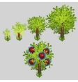 Growth stages of Apple tree with red fruit vector image vector image