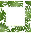 philodendron monstera leaf banner card vector image vector image