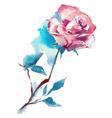 rose watercolor sketch vector image