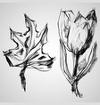 sketch of maple and tulip vector image