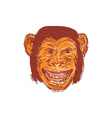 Chimpanzee Head Front Isolated Drawing vector image vector image