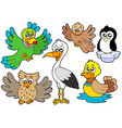 cute birds collection 2 vector image