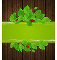 Green horizontal banner with leaves and ladybug vector image vector image