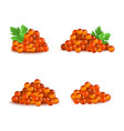 realistic detailed 3d red caviar different types vector image vector image