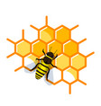 working bee on honeycomb filled with honey vector image