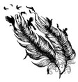 feather with birds vector image vector image
