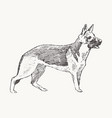german shepherd dog realistic sketch drawn vector image vector image