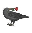 raven with rose in beak sketch vector image vector image