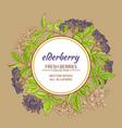 elderberry frame vector image vector image