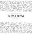 nuts and seeds banner template natural tasty and vector image vector image