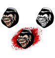 three heads of gorillas vector image vector image