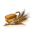 watercolor bread and wheat vector image vector image