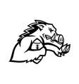 Wild boar or razorback with american football