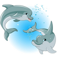 dolphins couple vector image vector image
