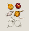 hand drawing realistic collections onion vector image vector image