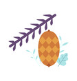 pinecone on spruce pine or fir tree branch vector image