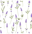 seamless pattern lavender vector image vector image