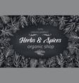 sketch herbs vector image vector image