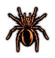 tarantula spider mascot vector image