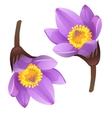 Blooming purple flower bud on white background vector image vector image