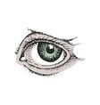 eye symbol drawing on white background vector image