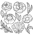 roses flower vector image vector image