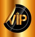 vip card vector image vector image