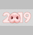 2019 pig nose vector image