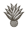 agave with leaves symbol tequila ingredient vector image