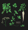 parsley set hand drawn colorful collection with vector image vector image
