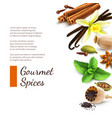 Spices on white background vector image vector image