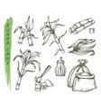 sugar cane or sugarcane isolated sketch symbols vector image vector image