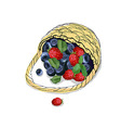 The picture of the basket with scattered berries vector image vector image