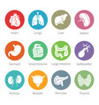 icon set of human internal organs in flat style vector image