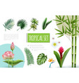 realistic tropical plants collection vector image