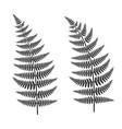 fern leaf set vector image vector image