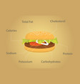 hamburger nutrition fact details with flat style vector image vector image