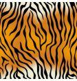 seamless texture tiger skin vector image